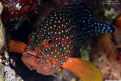 Fish Ipad Spots Background Wallpapers Laptop Desktop