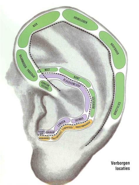 Acupunctuurpunten oor