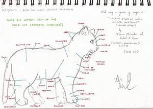 Cat Diagram