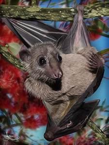 1877 best images about Bats! ~ on Pinterest | Baby bats ...