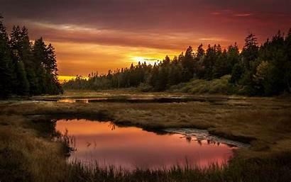 Wallpapers Sunset Widescreen Backgrounds Forest Wallpapersafari 2560