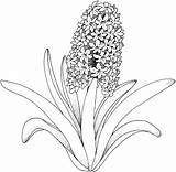 Flower Columbine Drawing Getdrawings Coloring Pages Fish sketch template