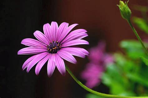 i fiori semplici 3 semplici suggerimenti per fotografare i fiori club