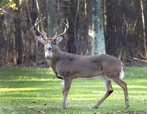 big buck photo contest    alabama hunting season