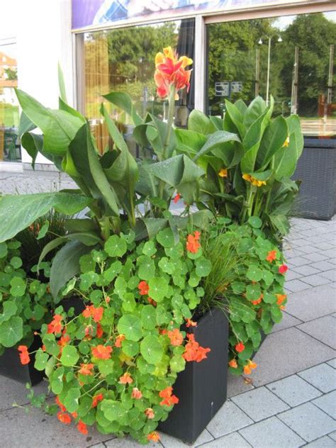canna in pots 106 best images about creative window boxes and containers on gardens window boxes