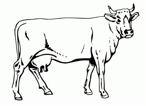 Vaca Para Niños Hd
