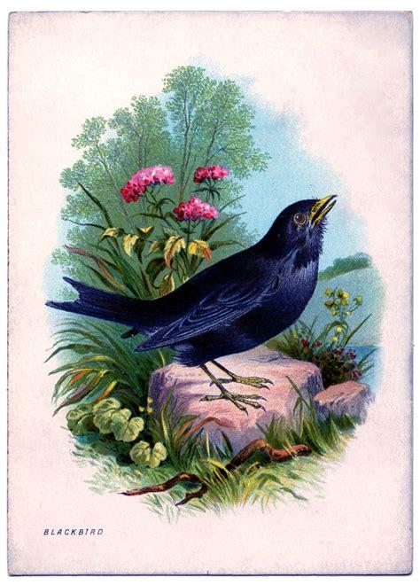 instant art printable beautiful blackbird  graphics