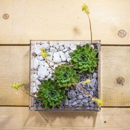 vasi in plexiglass plexiglass idee originali vaso composizione piante