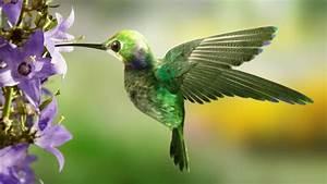 F 15 Vitesse Maximale : quelle est la vitesse maximale d 39 un oiseau mouche courtship la femelle ~ Medecine-chirurgie-esthetiques.com Avis de Voitures