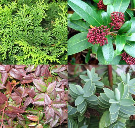 bloembakken opvullen met winterharde planten