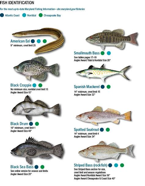 Nh Boating License Requirements by Fish Identification Maryland Fishing Regulations Guide