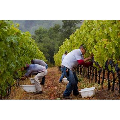 Welcome to Wine – making WineCollective Blog