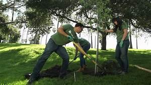 Treepeople - C U00f3mo Plantar Un  U00c1rbol