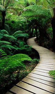 Beautiful Nature Wallpaper For Mobile free nature ...