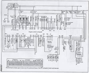1995 Holden Rodeo Wiring Diagram Pdf