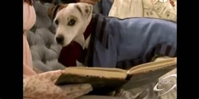 Wishbone Dog Soccer Reblog God Originally Posted