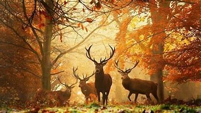 Deer Wild Mobile