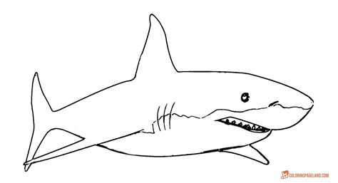 Coloring Shark by Great White Shark Coloring Pages Downloadable And