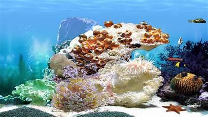 Aquarium 3d Amazing Screensaver Animated Desktop Windows