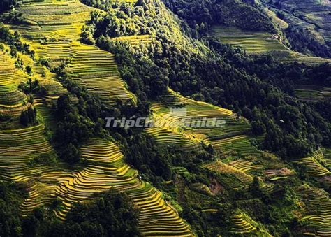 yuanyang rice terraces yuanyang rice terraces in summer yuanyang rice terraces