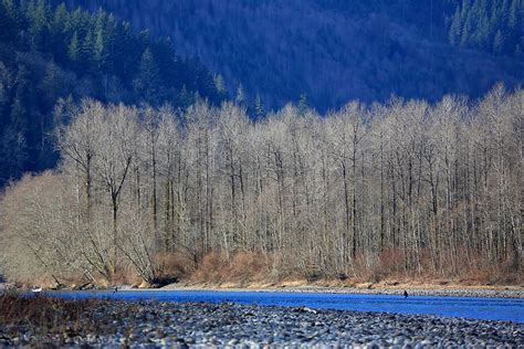 skagit river fly fishing steelhead guide