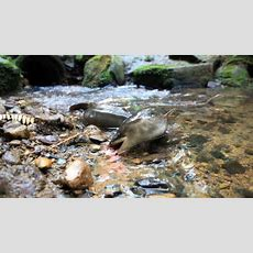 Freshwater Species Disappearing Rapidly  Radio New Zealand News