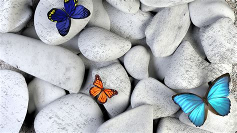 Butterfly And Stones by Thyroid Health Symptoms Of Hypothyroidism Hyperthyroidism