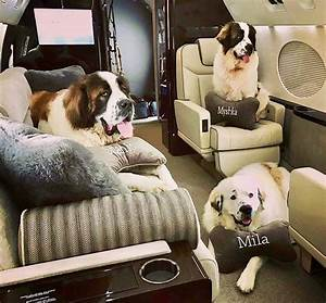 Automotive Floor Plan A Couture Jet Takes Flight With First Class Pups