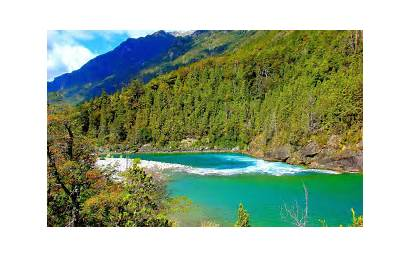 Chile Landscape Forest Summer Nature River Water