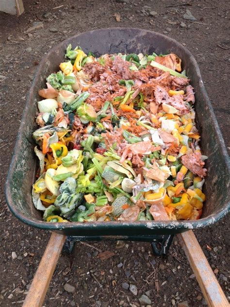 compost cuisine worm food worm composting headquarters