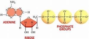 What Are Three Parts Of An Atp Molecule