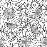 Coloring Sunflowers Adults Bouquet Vector Sunflower Hand Abstract Seamless Adult Zentangle Drawn Illustration Ornament Flowers Clip Tattoo Illustrations Bohemia Pen sketch template
