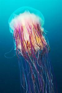 Jellyfish in Space! - Ripley's BION Blog  Jellyfish
