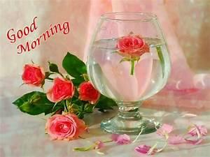 Lovely Pink Rose Images for Fresh Good Morning | Festival ...