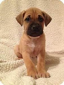 Boxer Retriever Labrador Mix   Dogs   Pinterest   Labrador ...