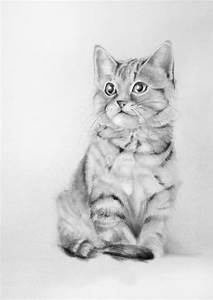 Custom Portrait Of Your Cat 7x5 Pencil Drawing From Your Photo