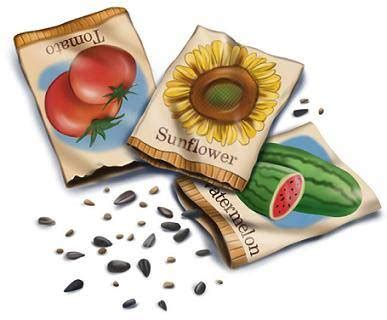 garden of seed garden seeds seed starting timetables