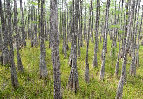 forest florida pine state log waterfalls natural nature visit visitflorida things