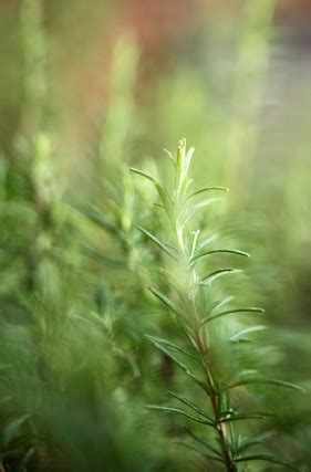 beth trissels blog herb gardens  colonial america