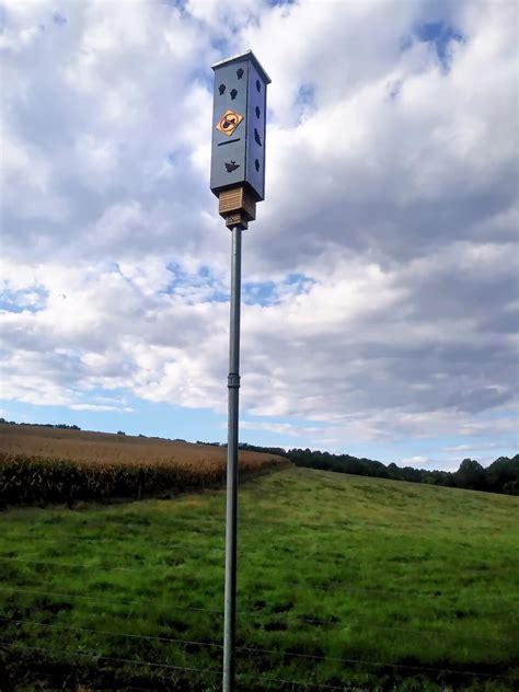 build  bat house tips  plans  pole mounted