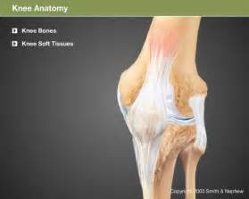 Total Knee Replacement Anatomy