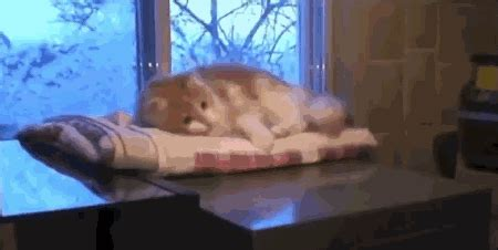 funny cat gif ideas  pinterest cute cat gif