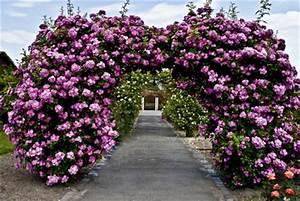 Rosen Für Rosenbogen : rosenbogen eisen modelle als robuste kletterhilfe f r rankpflanzen ~ Orissabook.com Haus und Dekorationen