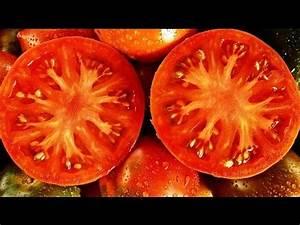 Dünger Für Tomaten : der beste d nger f r tomaten meine erfahrungen tomaten zu d ngen youtube ~ Watch28wear.com Haus und Dekorationen