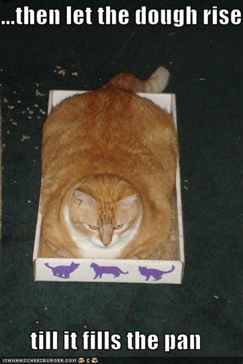 Bread Cat Meme - dump a day attack of the funny animals 40 pics funny cat photo pinterest small boxes
