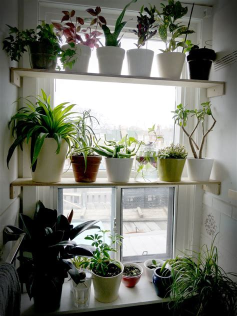 House Plants For Kitchen Window by Pin By Theresa Marion On Gardening In 2019
