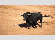 National Animal Of Spain Bull 123Countriescom