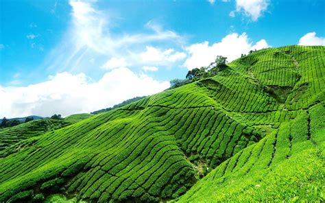 the world outside the tea gardens beautiful scenery