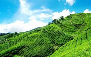 The world outside the tea gardens beautiful scenery ...