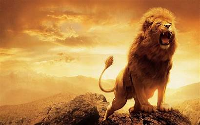 Lion Wallpapers Backgrounds 1920a 1200 Wallpaperplay